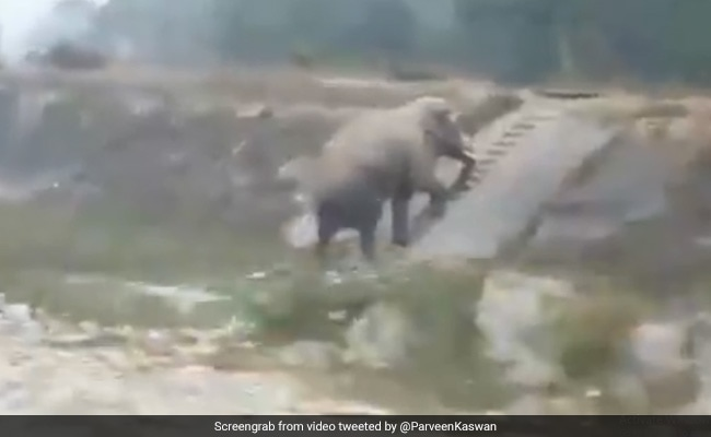 Viral Video Of An Elephant Climbing Narrow Stairs Amazes Twitter
