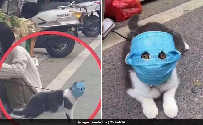 rm5oov5_cat-wears-face-mask-coronavirus_
