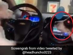 कार में बार-बार भौंक रहा था कुत्ता, फिर दूसरे कुत्ते ने गुस्से में किया ऐसा... देखें TikTok Viral Video