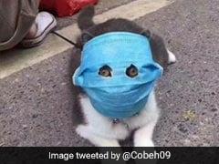 Pets In China Wear Face Masks Amid Coronavirus Crisis