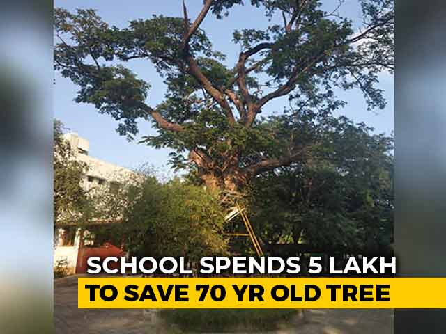 Video : Chennai School Spends Rs 5 Lakh to Save Old Tree.