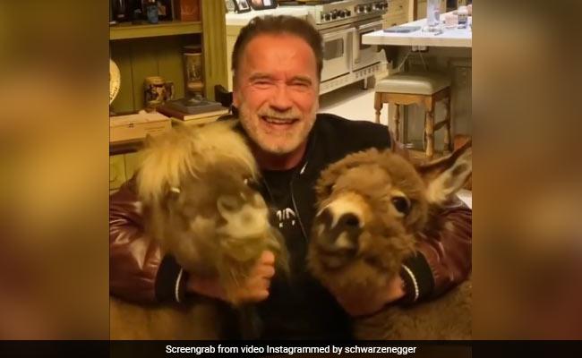 Trending: Arnold Schwarzenegger's Mini Pets Steal The Show In Video On Coronavirus