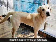 "Ratan Tata Shares Adoption Appeal For ""Sur"", A Dog With No Family"