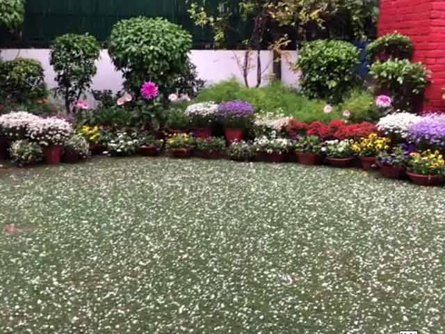 Video : Watch: Massive Hail Stones Showered Down In Delhi Today