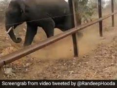 Viral Video: जंगल में हाथी के पीछे पड़ गया शख्स, देखते ही चलाने लगा गोली, रणदीप हुड्डा ने शेयर किया वीडियो