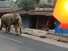 In Kerala, Elephant Takes To Streets To 'Inspect' Lockdown