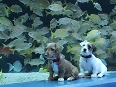 "Two Puppies Visit An Aquarium. Video Has Internet Saying ""Aww"""