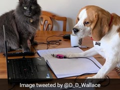 Amid Work From Home Epidemic, Twitter Tests If Laughter Is Best Medicine