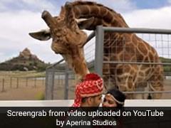 कपल करा रहा था फोटोशूट तभी पीछे खड़े जिराफ ने किया ऐसा और फिर... देखें Viral Video
