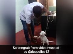 Video of Bangalore Police Training Stray Dog For Canine Unit Wins Internet