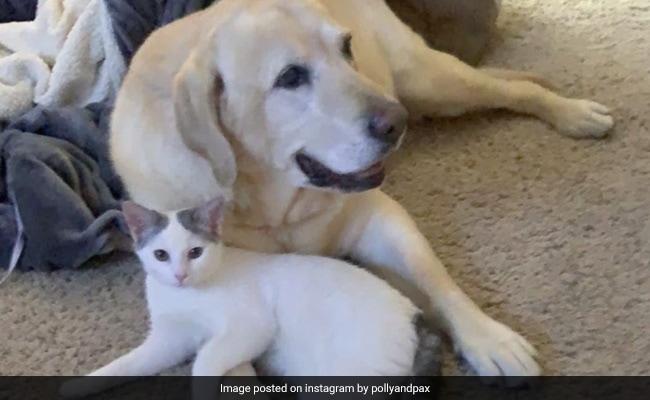 'He Fell In Love': Elderly Dog Finds A Best Friend In Orphaned Kitten