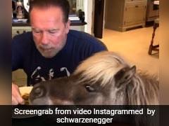 Coronavirus: हॉलीवुड सुपरस्टार घर में पालतू गधों के साथ खा रहे हैं खाना, पी रहे व्हिस्की- देखें Video