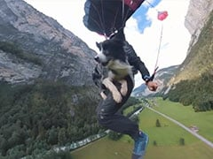 Dog Jumps Off 2,300-Foot Cliff, Parachutes To The Ground With Owner. Watch