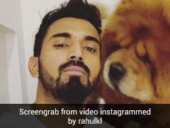केएल राहुल ने कुत्ते के साथ पोस्ट किया Video तो अथिया शेट्टी ने दिया ऐसा रिएक्शन, वायरल हुआ कमेंट