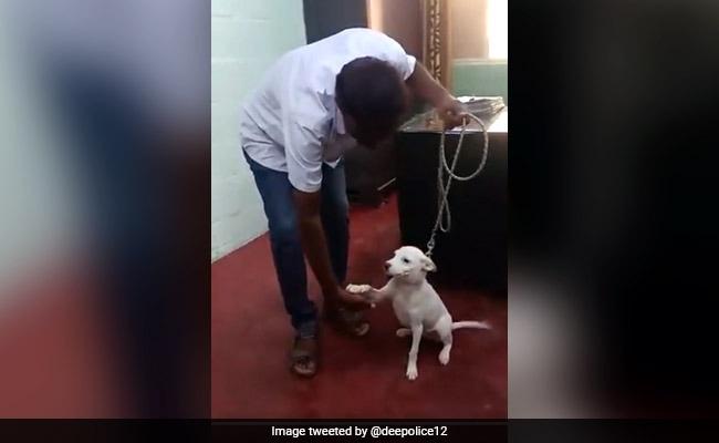 Video of Bangalore Police Training Stray Dog For Canine Unit Wins Internet