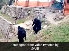 Watch: What Happens When Officials In Bear Costumes Confront Monkeys