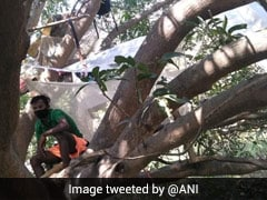 7 Bengal Labourers Quarantined On Tree After Return From Chennai