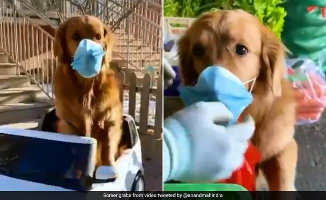 How Will World Change After Coronavirus? Anand Mahindra's Funny TikTok Video Answers