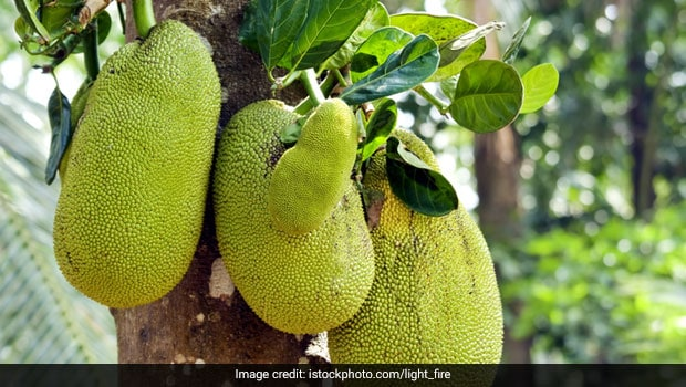 India's Jackfruit Goes Global, Gains Popularity Delicious Meat Substitute