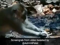 बंदर ने पानी बचाने की कोशिश में किया कुछ ऐसा, Video पोस्ट कर बॉलीवुड एक्टर बोले- हर इंसान को...