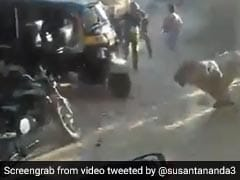 """Even Usain Bolt Can't Escape"": Forest Official Shares Video Of Charging Lion"