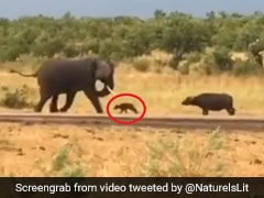 Baby Buffalo Charges At Elephant. His Mom's Reaction Has Twitter Amused