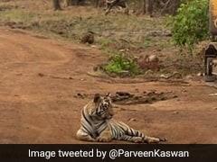 जंगल में बैठा था बाघ और चल रहे थे बुलडोजर, बॉलीवुड एक्ट्रेस बोलीं- तरक्की के नाम पर विनाश...