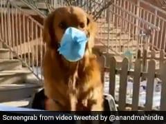 आनंद महिंद्रा ने बताया Corona Virus से बचने का तरीका, शेयर किया ये TikTok वीडियो, बोले- 'इस कुत्ते को दो इनाम...'