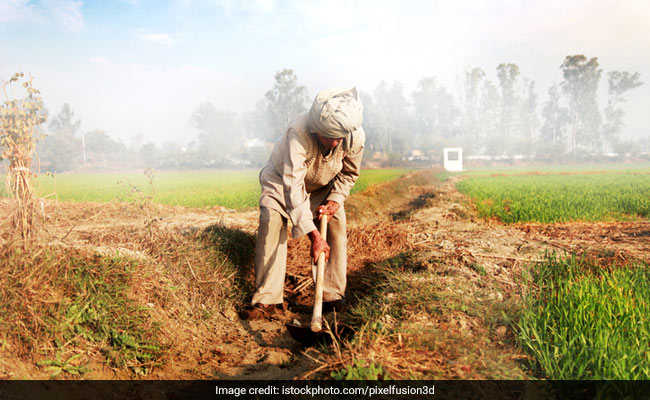 Farmer Razes 1-Acre Cabbage Crop As Prices Tank Amid Lockdown: Report