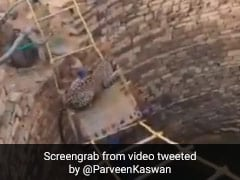 Watch How This Leopard Was Rescued From A Well In Madhya Pradesh