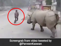 Rhino Takes To The Streets, Chases A Man Away In Viral Video