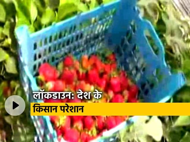 Videos : लॉकडाउन के चलते खेतों में ही बर्बाद हो रही हैं फल-सब्जियों की फसल