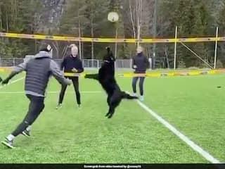 कुत्ते ने गजब अंदाज में खेला वॉलीबॉल, लोगों ने कहा- अदभुत..देंखे  Viral Video