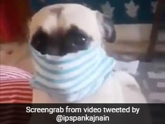 कुत्ते ने गजब अंदाज में चेहरे पर लगाया मास्क, IPS ने वीडियो शेयर कर लिखा- 'ये कर सकता है तो...' देखें Video