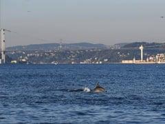 Coronavirus: Dolphins Swim Close To Turkey Shore Amid Lockdown. Here's Why
