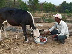 Rajasthan Government Unveils Measures To Provide Relief To Farmers