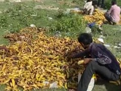 In Lockdown Desperation, Migrants Pick Bananas Trashed Near Delhi Cremation Ground