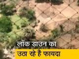 Video : Covid-19: लॉक डाउन की आड़ में मुंबई की आरे कॉलोनी में काटे जा रहे हैं पेड़