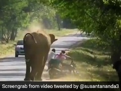 Elephant Charges At Bike, Forces Riders To Run In Hair-Raising Footage
