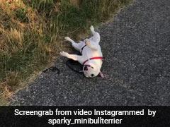सुपरमार्केट में थककर लेट गया कुत्ता, मालिक ने किया ऐसा काम, फिर बोले- 'बहुत आलसी है ये...' देखें Video
