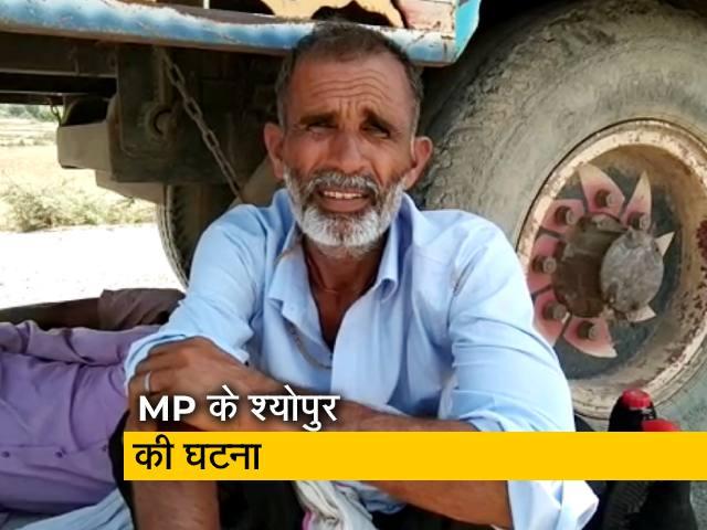 Videos : मध्य प्रदेश: गेंहू बेचने आए किसानों पर लाठियां