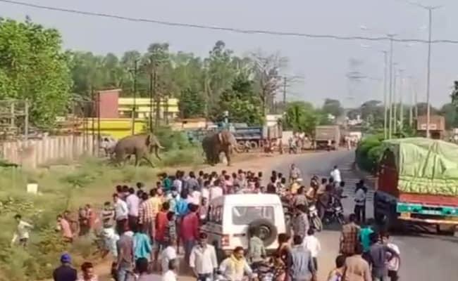 छत्तीसगढ़ में बस्ती में घुसे दो हाथी शोर होने पर हिंसक हो गए, एक युवती को किया घायल, देखें-VIDEO
