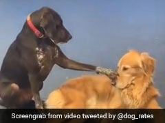 Meet Ruby, The Dog Who Loves Petting Other Dogs. Video Will Make Your Day