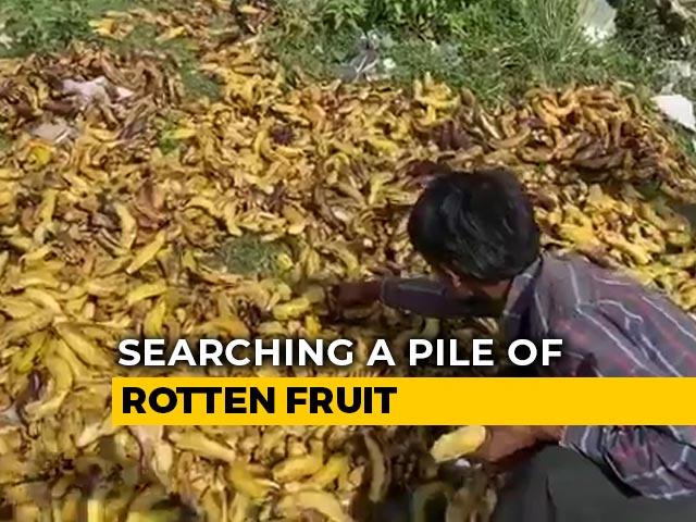 Video : In Desperation, Migrants Pick Bananas Trashed Near Delhi Cremation Ground