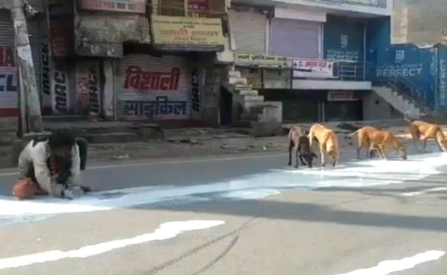 Coronavirus - Man, Dogs Sharing Spilt Milk In Agra Shows Lockdown Desperation