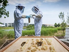 Coronavirus Pandemic: Rolls-Royce Focuses On Honey Production After Temporarily Suspending Operations