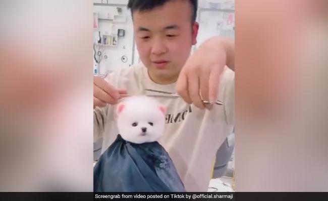 बाल कटवा रहा था प्यारा सा डॉगी, लटक जा रही थी गर्दन, 10 करोड़ से ज्यादा बार देखा गया ये TikTok Video