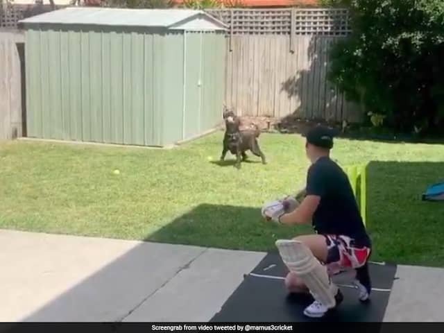 Watch: Marnus Labuschagnes Pet Dog Pulls Off Impressive Catch In Slips