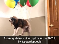 Over 20 Million Views For This Hilarious TikTok Video Of 'Flying' Dog
