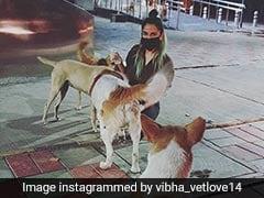 Meet The Delhi Student Feeding Stray Dogs During Coronavirus Lockdown